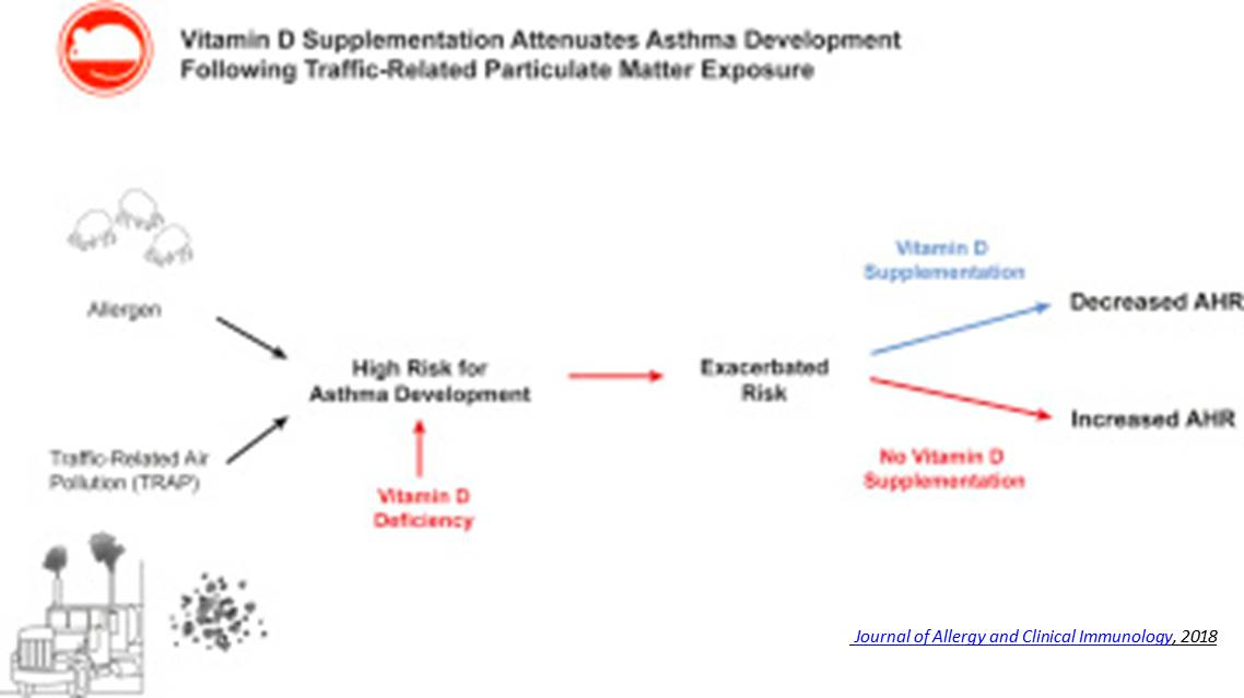 Vitamin D Supplementation Helps Prevent Asthma in Mouse Study