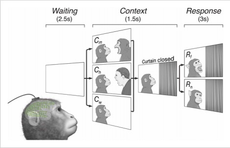 Brain network for observed social threat interactions