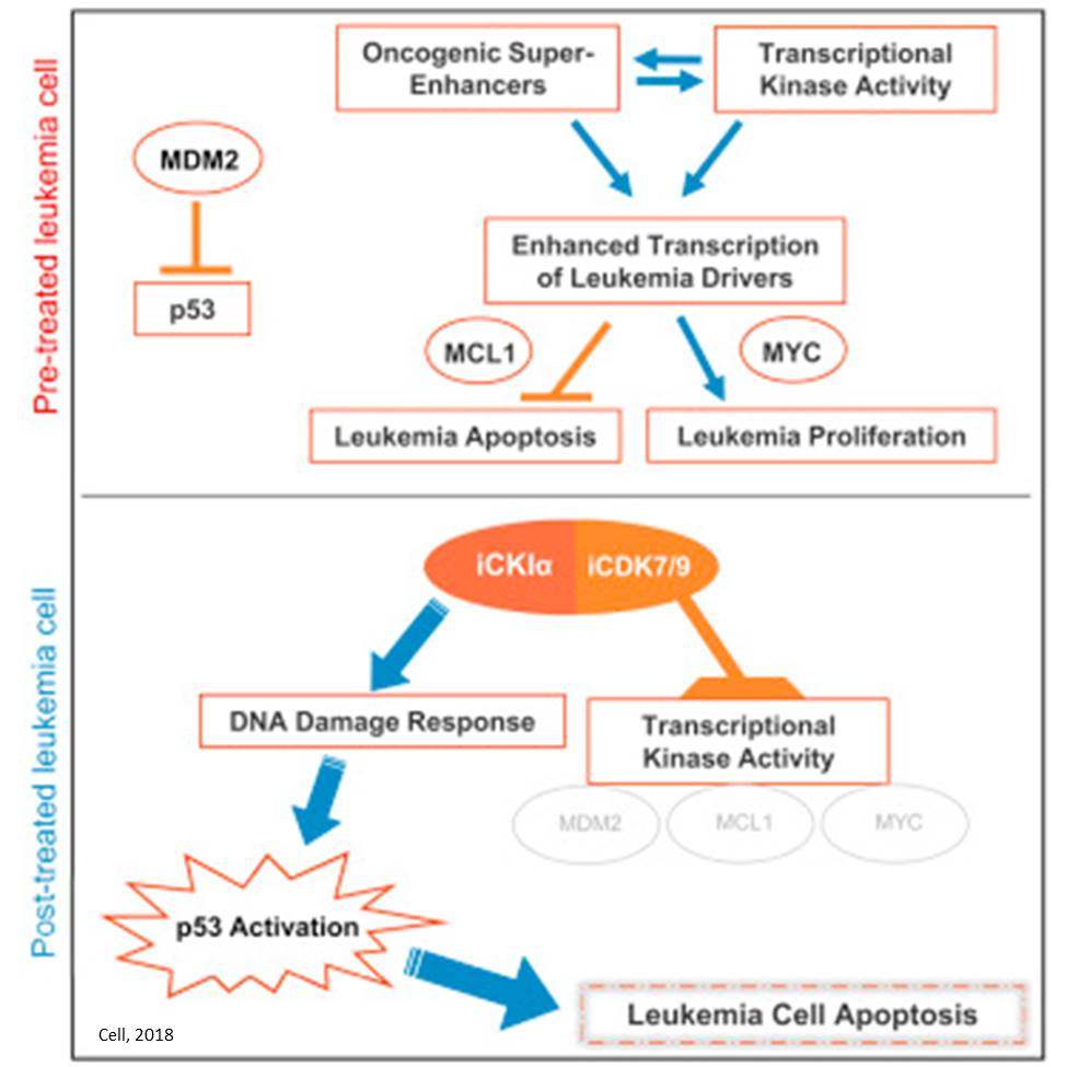 Small molecule inhibitor targets several proteins to cure for acute leukemia