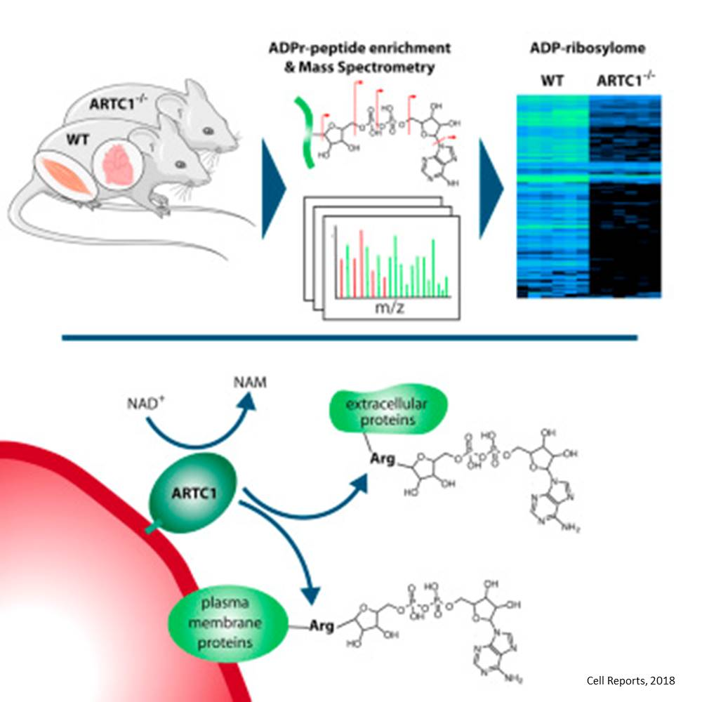 Technology to identify protein modification