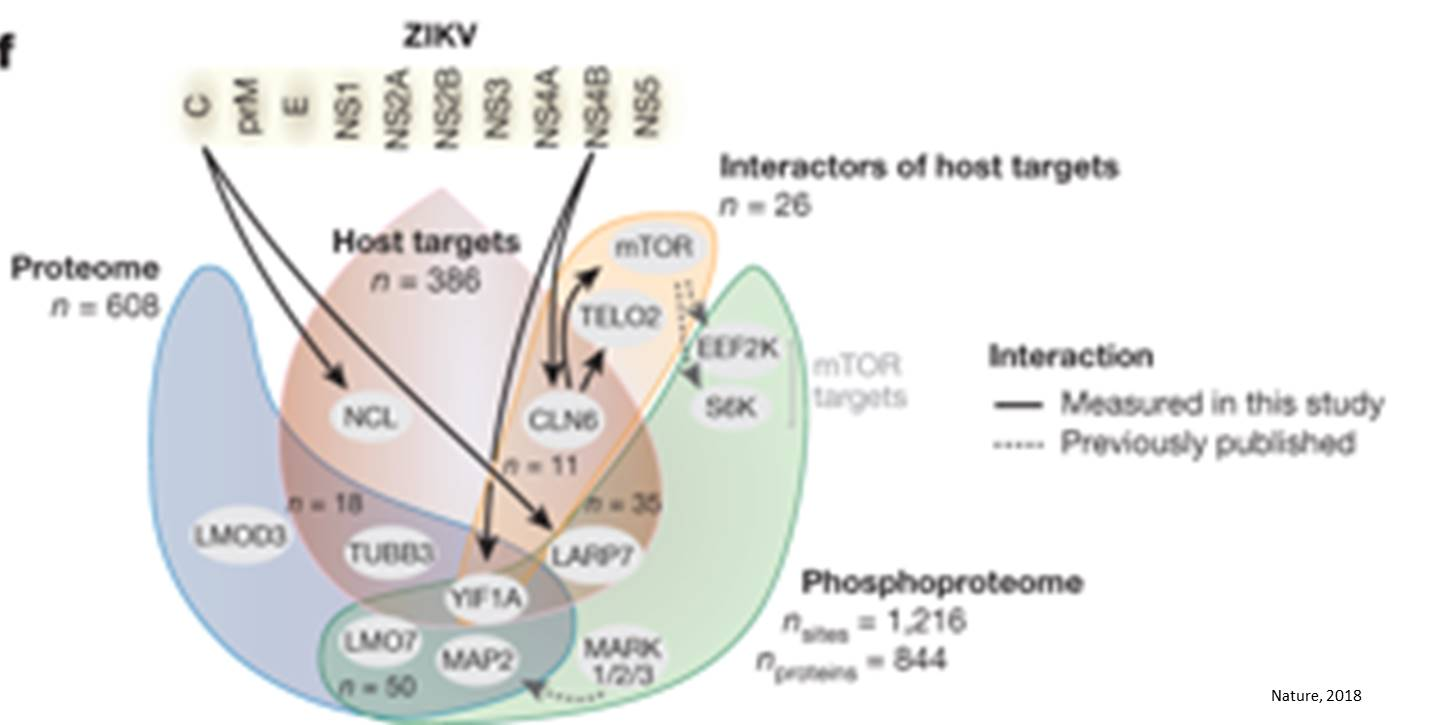 Proteomic analysis to identify the factors causing brain pathology in Zika infection