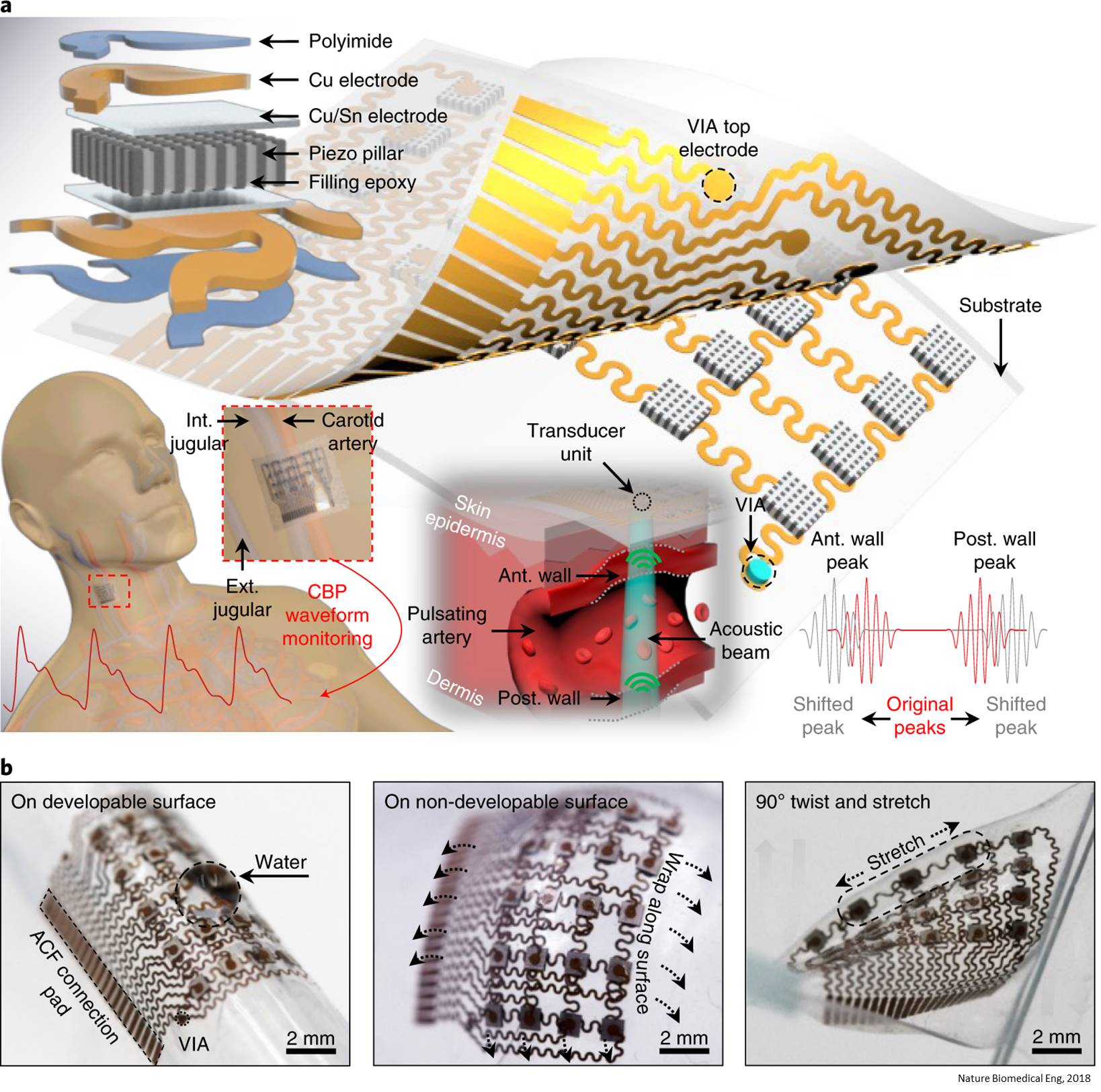 Blood pressure monitoring deep inside the body using non-invasive wearable patch