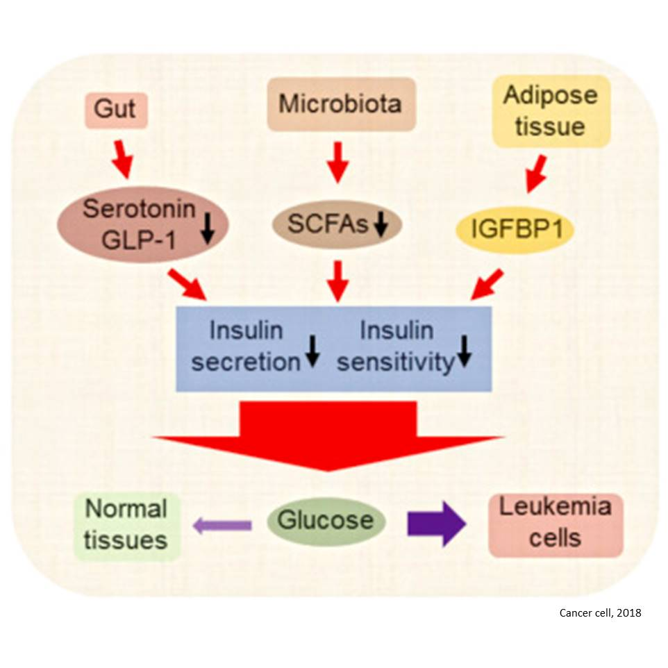 Cancer increases glucose supply by hijacking microbiome!