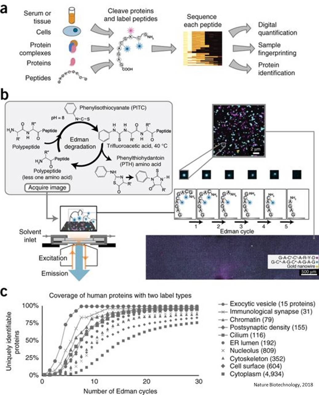 A single molecule fluorosequencing to sequence millions of proteins in a single sample