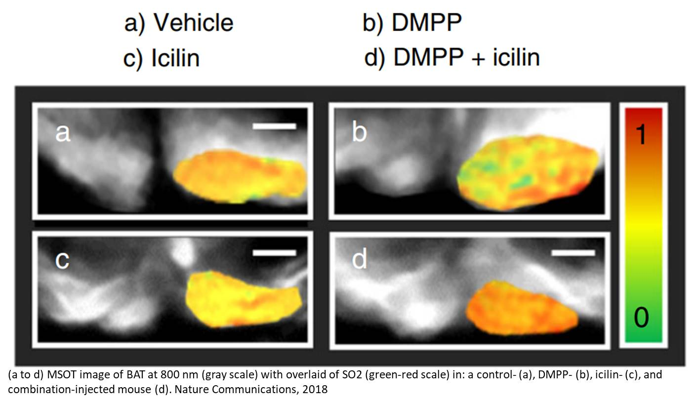 Mice lose weight by imitating effects from cold and nicotine