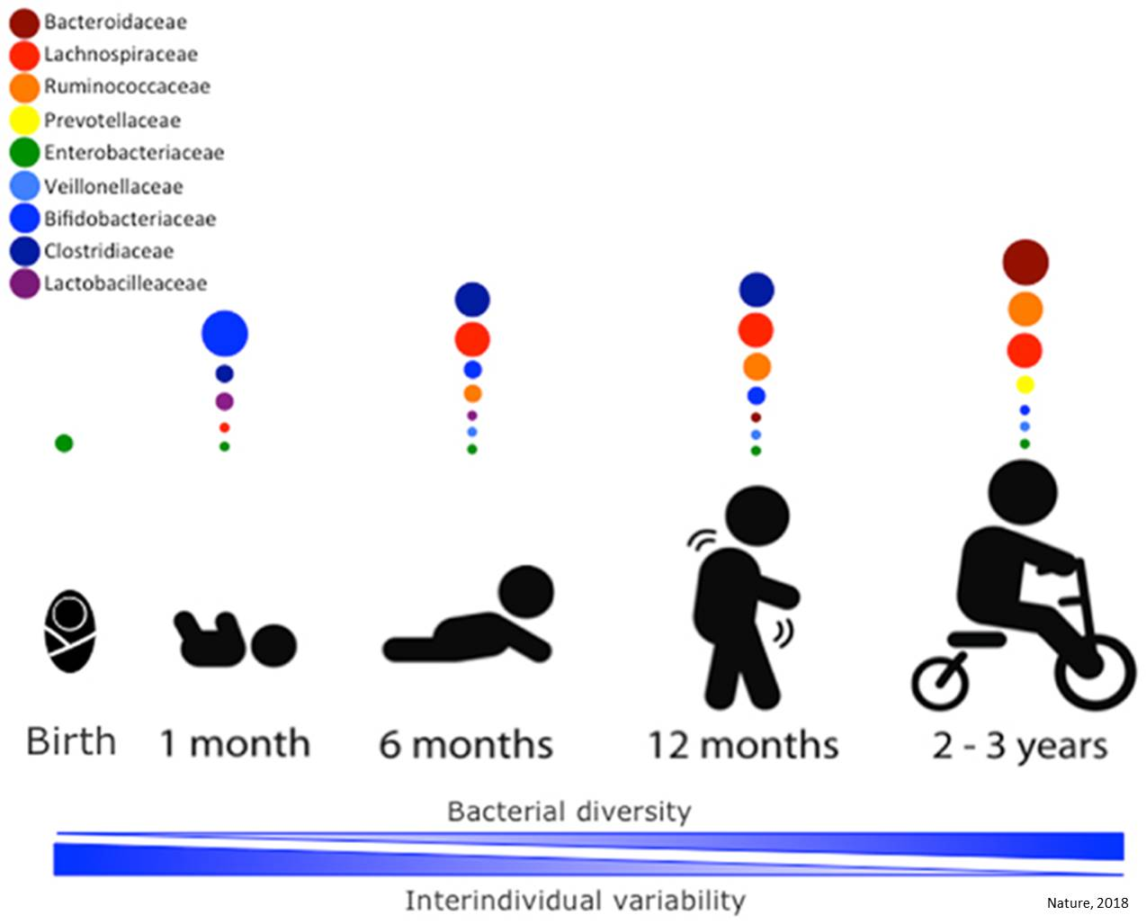 Importance of infant diet in establishing a healthy gut