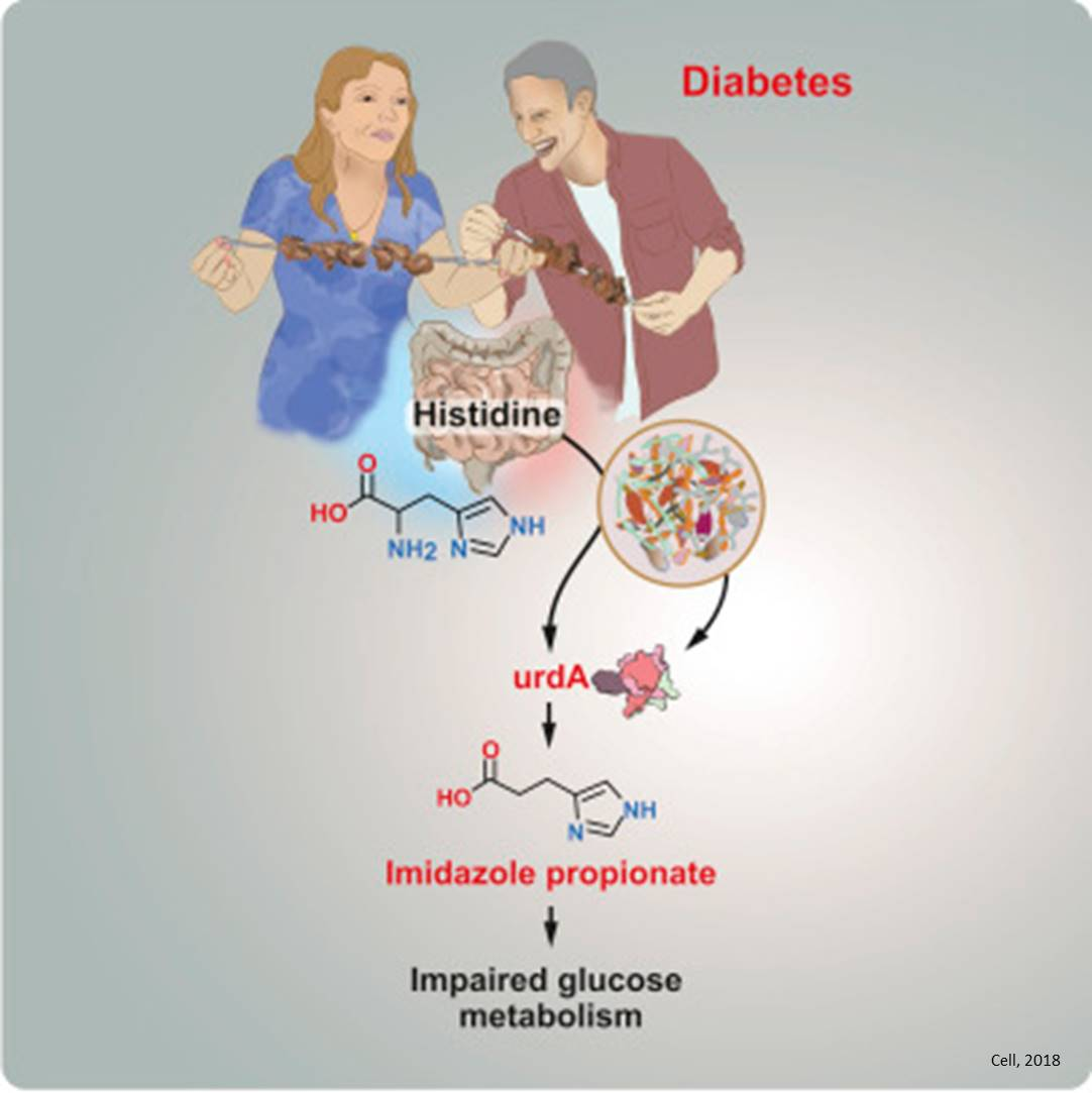 Metabolites from gut microbiota may cause diabetes