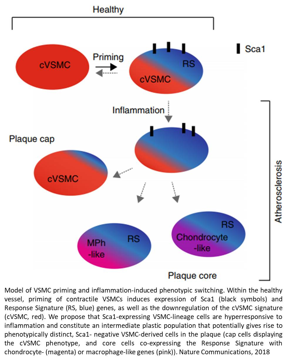 Transcriptional signature to help detect early blood vessel changes