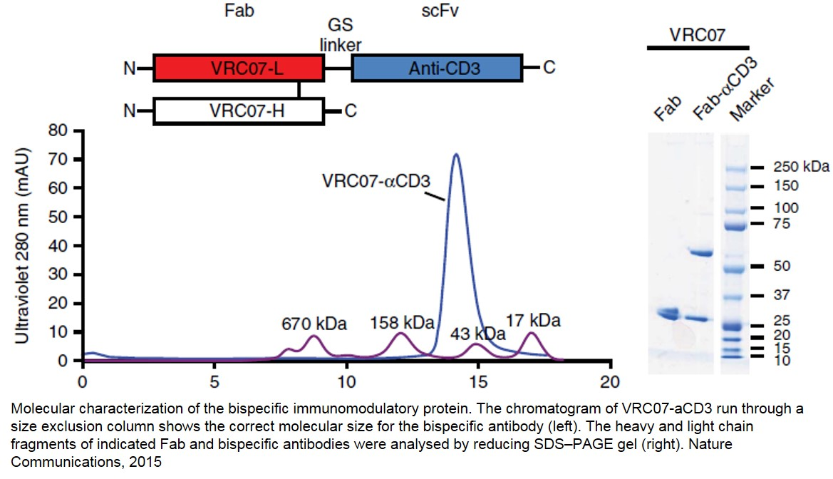 Way to kill hidden HIV-1