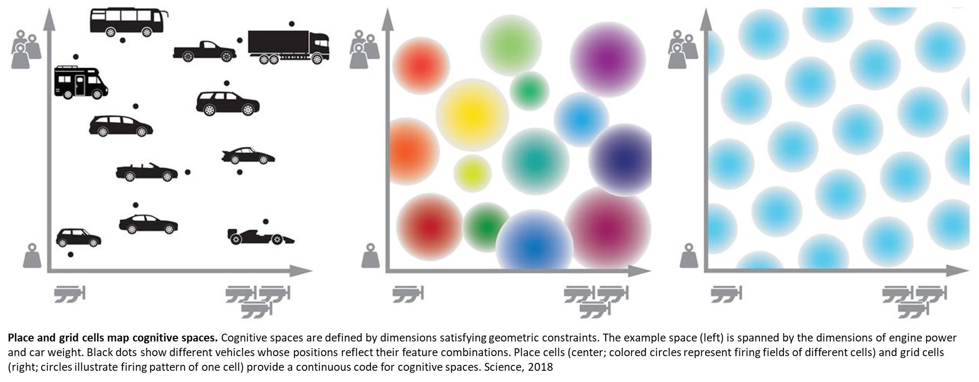 Spatial codes for human thinking