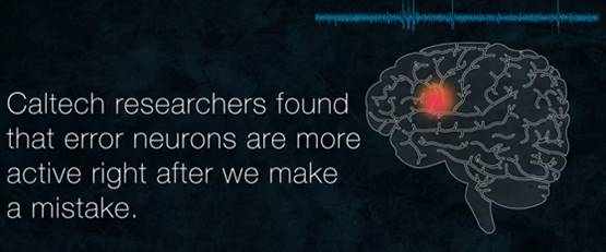 How neurons process mistakes and correct our behavior