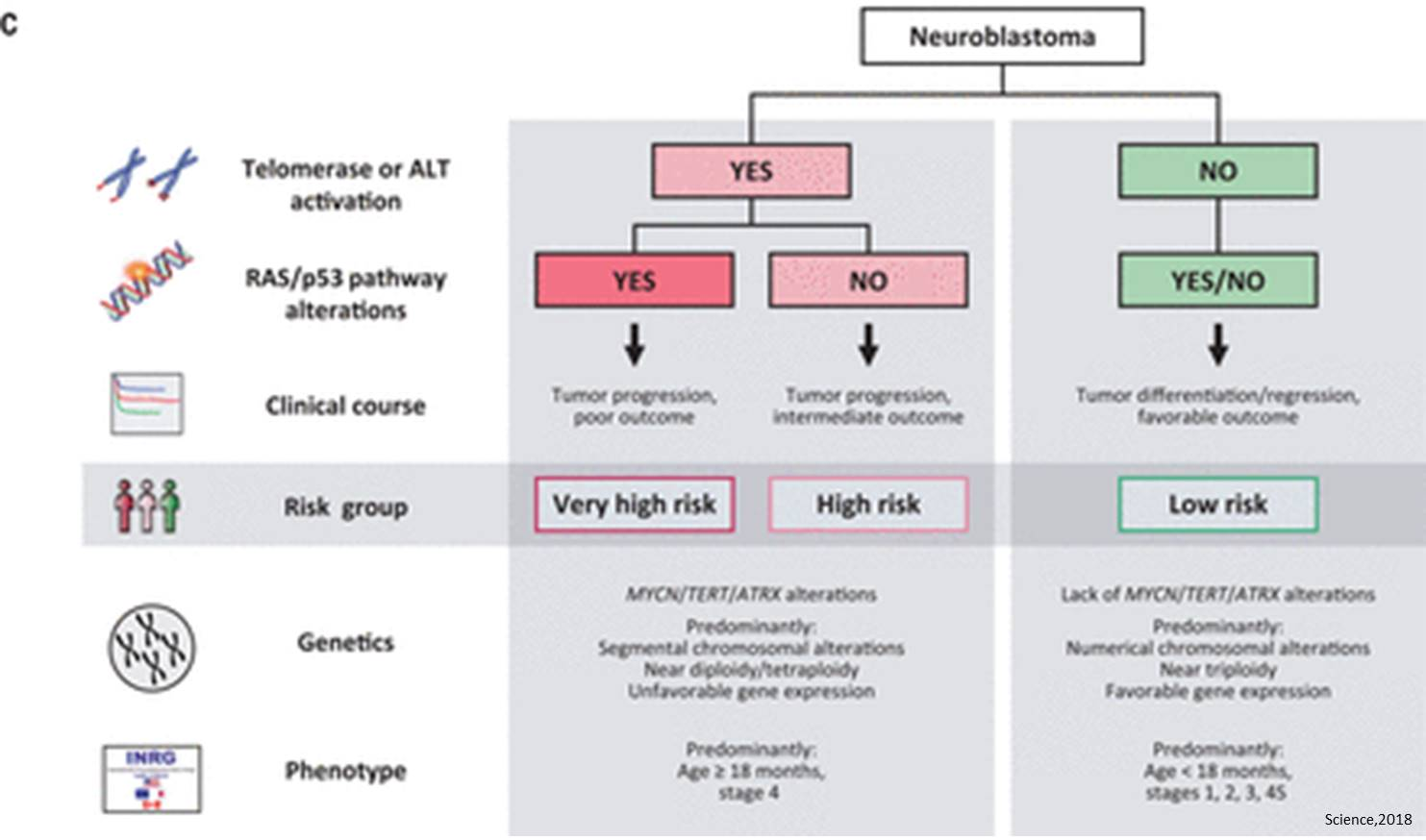A mechanistic approach to neuroblastoma prognosis and risk