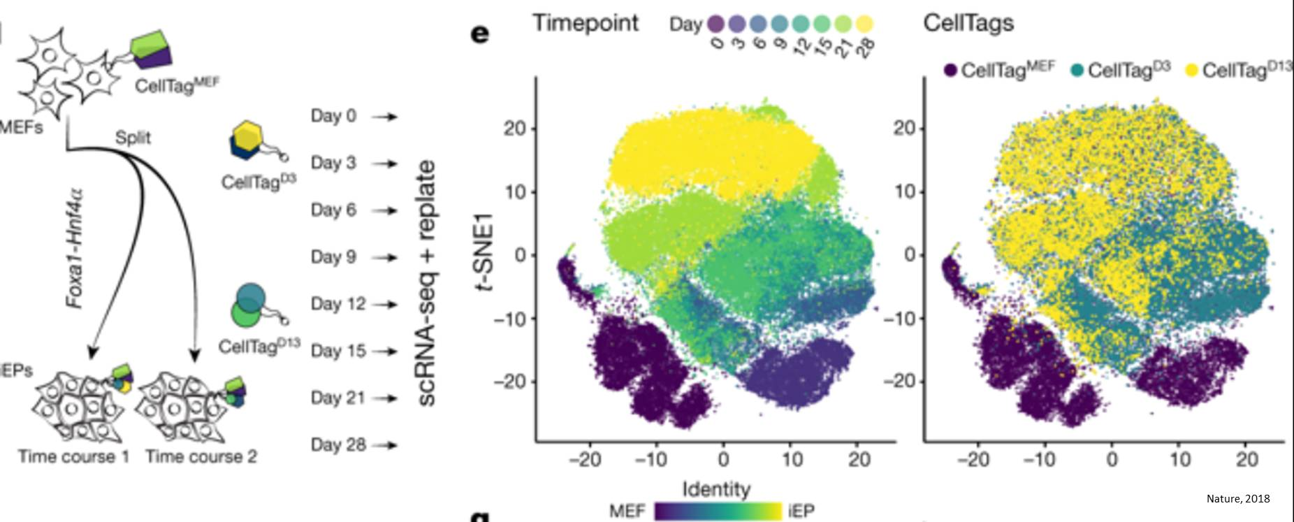 Single-cell lineage mapping identities direct reprogramming