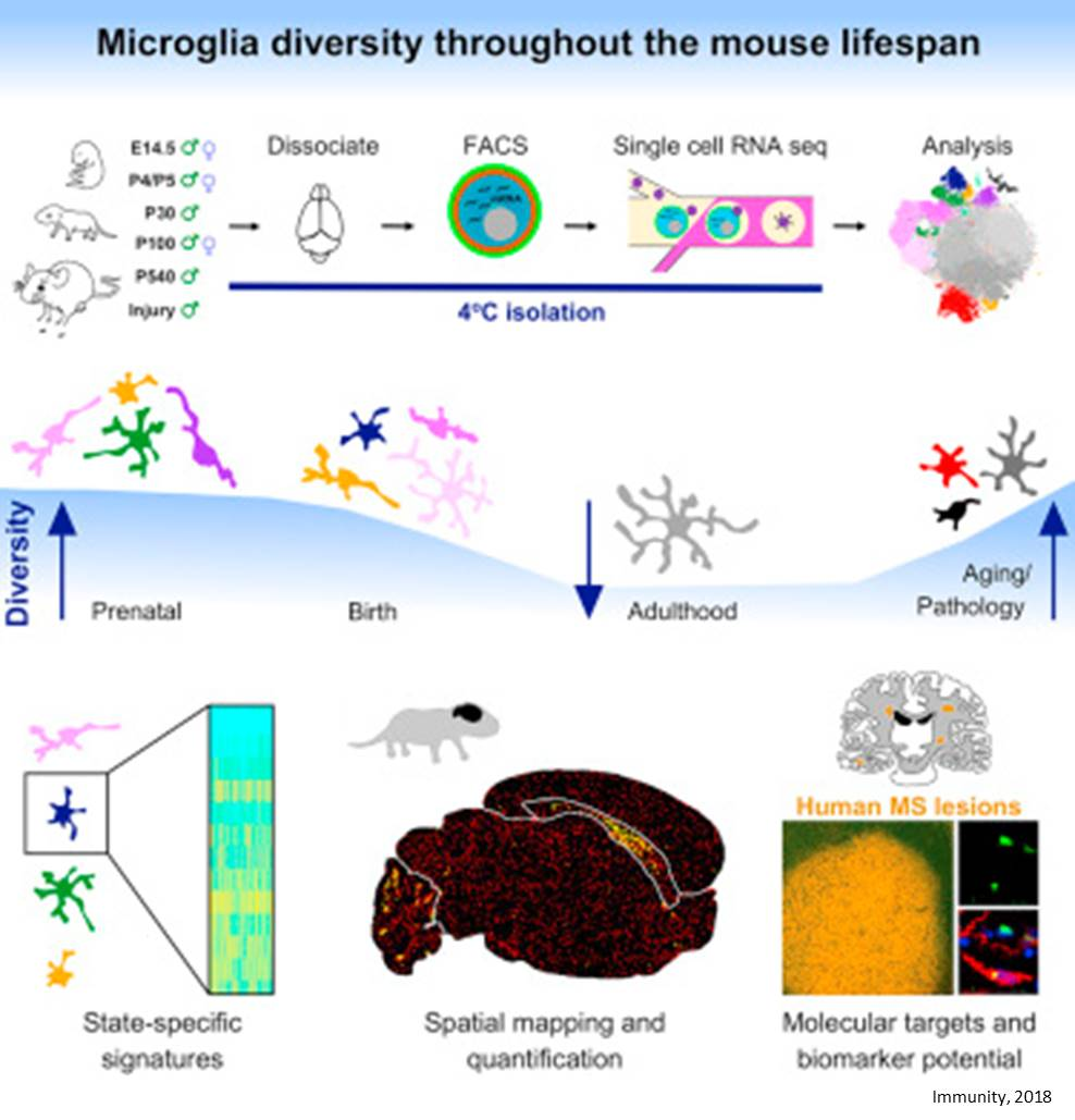 Single-Cell RNA Sequencing of Different Types of Microglia in the Brain