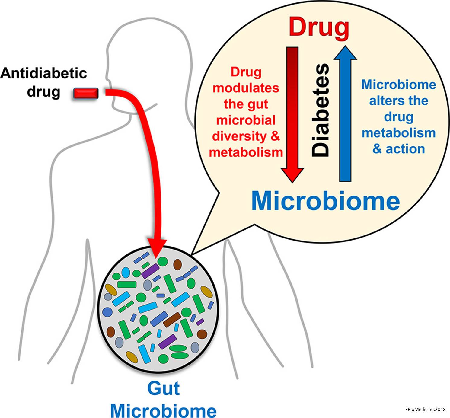 Gut microbiome may affect some anti-diabetes drugs