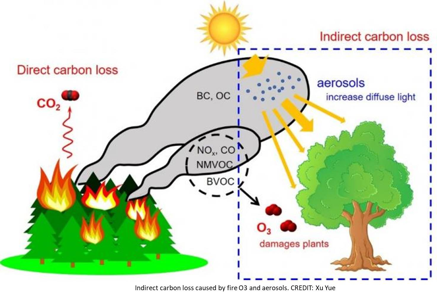 Fire air pollution weakens global ecosystem productivity