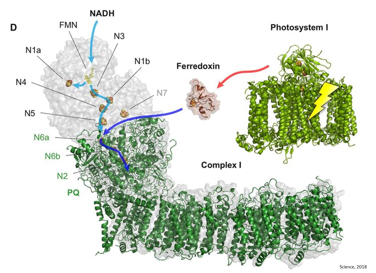 Structure and function of photosynthesis protein explained in detail