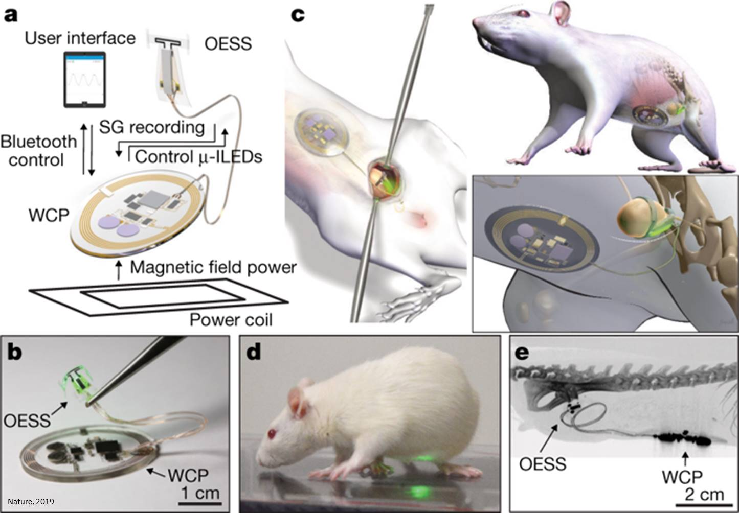 A wireless closed-loop system for optogenetic peripheral neuromodulation