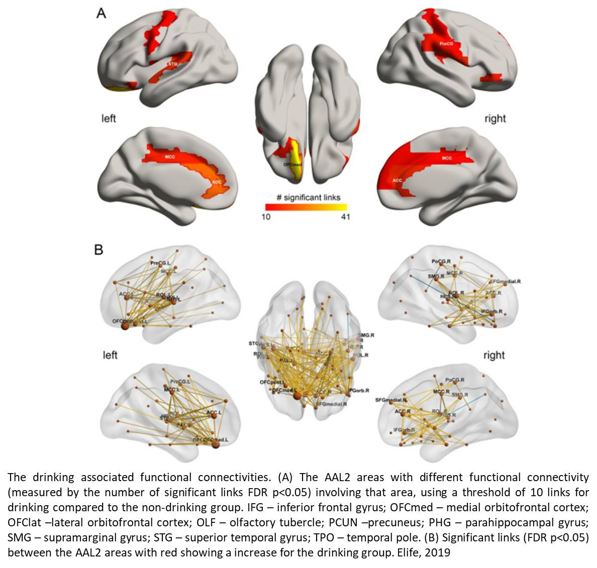 Different brain areas with varied connectivity linked to smoking and drinking