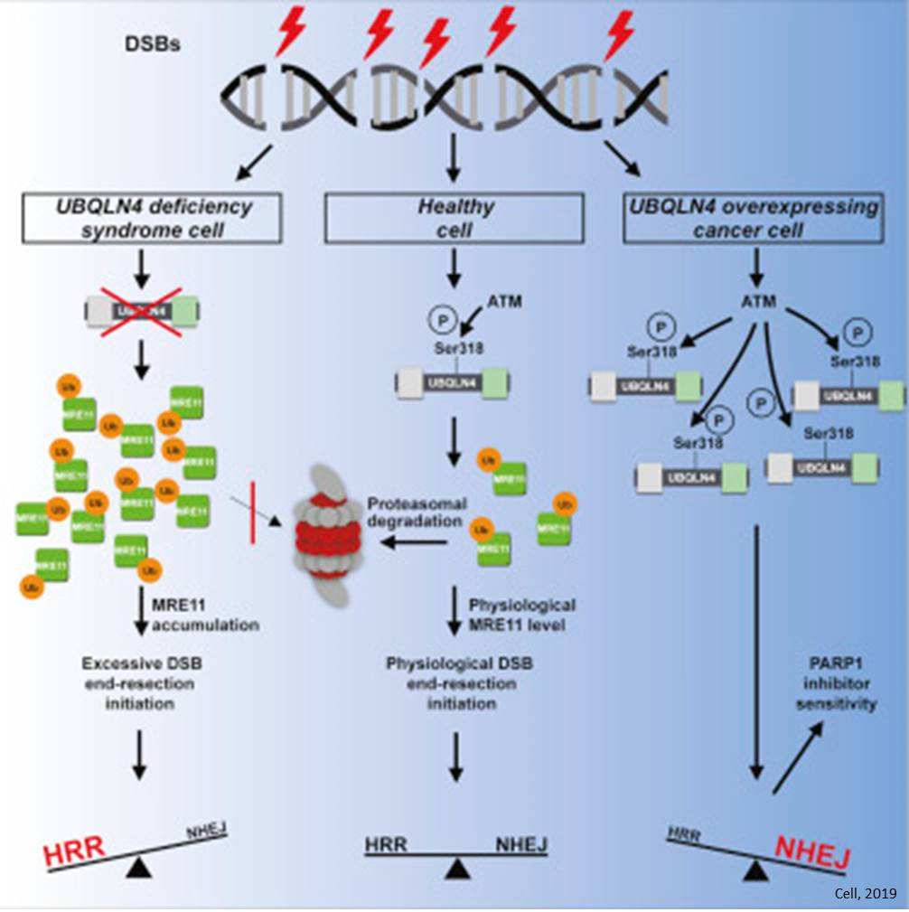 New Biomarker Panel Could Accelerate >> New Biomarker Links Cancer Progression To Genome Instability
