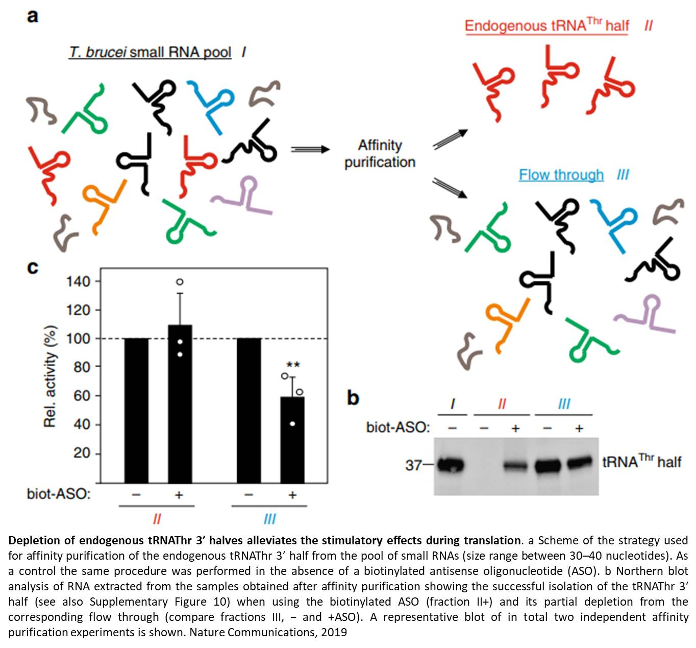 Non coding RNA promotes gene expression after stress