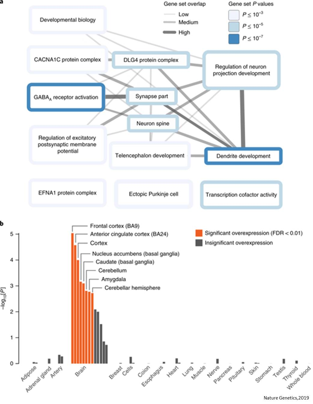 Genes associated with risk tolerance and risky behaviors
