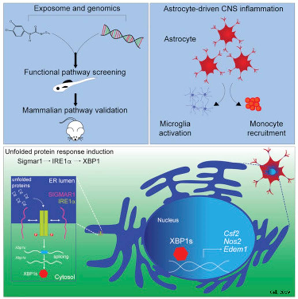 Control of Astrocyte Pathogenic Activities in CNS Inflammation by Environmental Factors