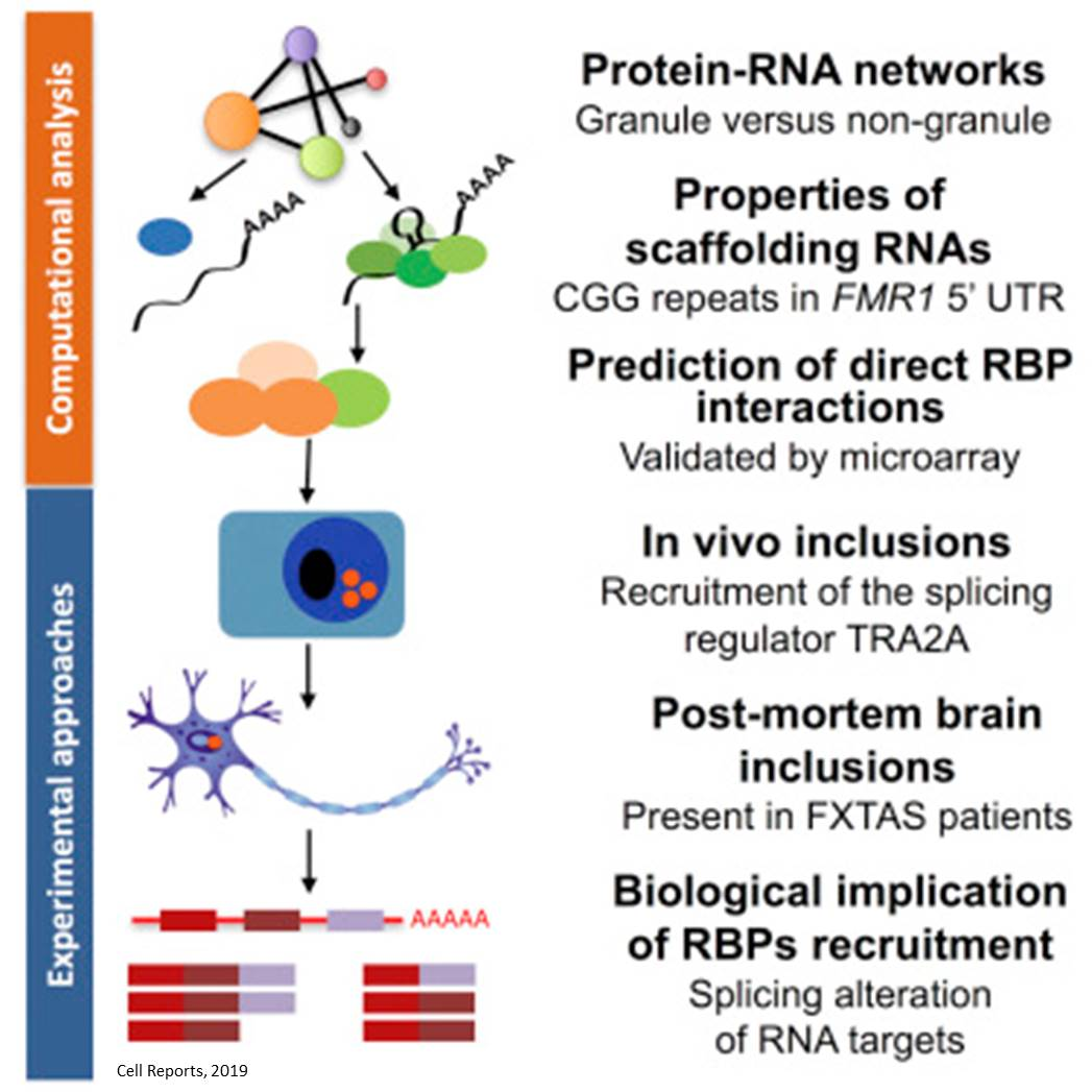 RNA scaffolding and protein aggregation in neurodegenerative diseases