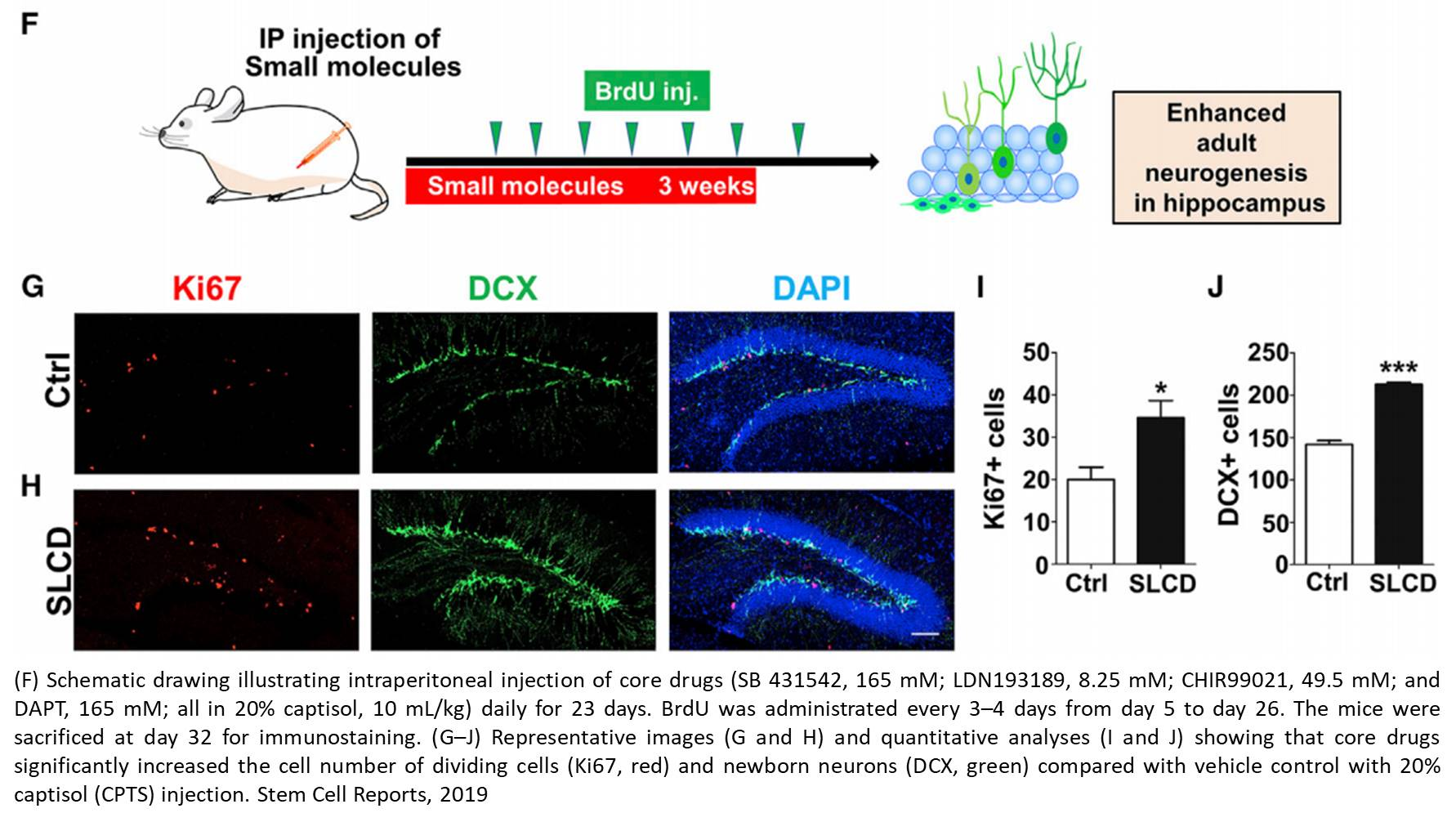 Converting human fetal astrocytes to neurons by modulating multiple signaling pathways