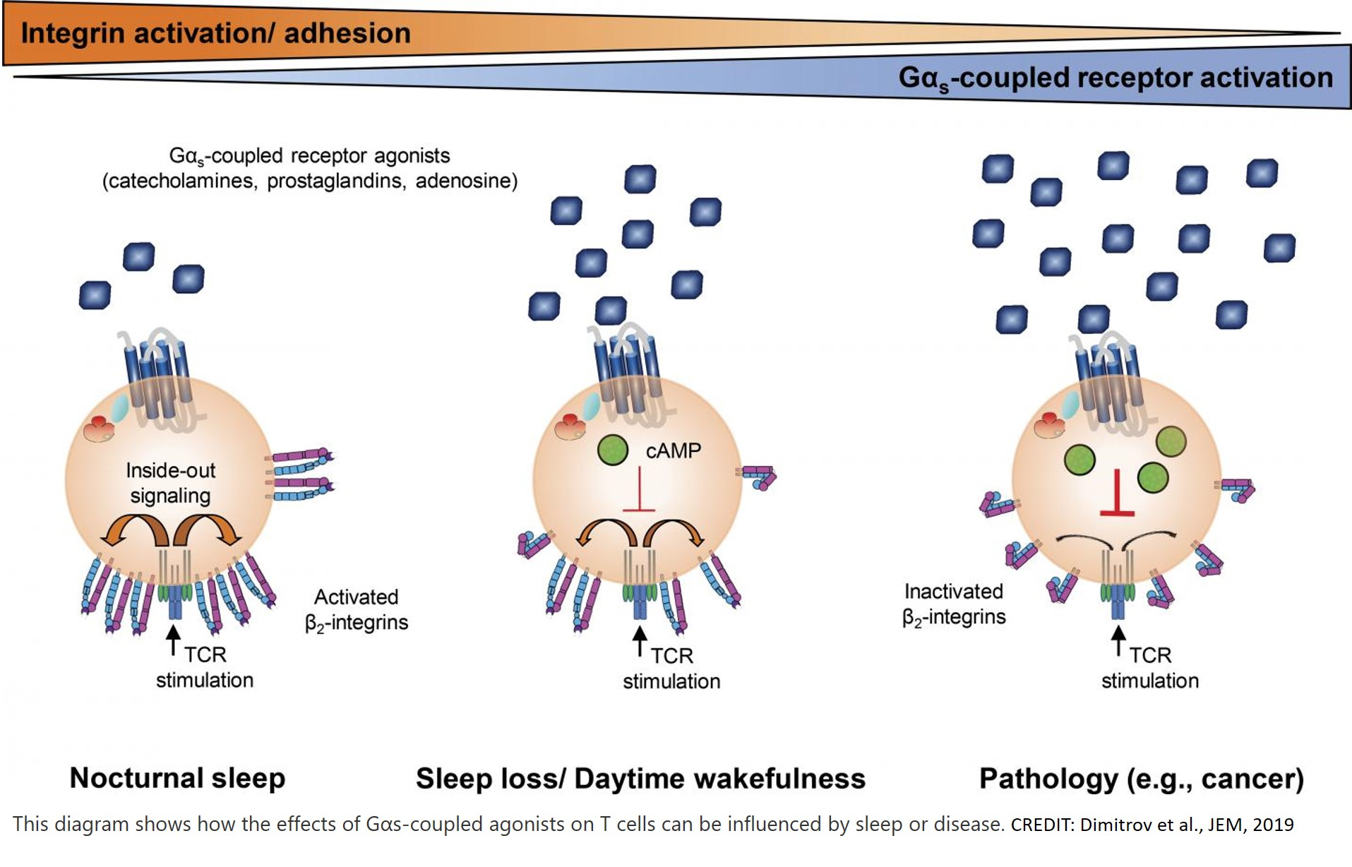 How sleep can fight infection