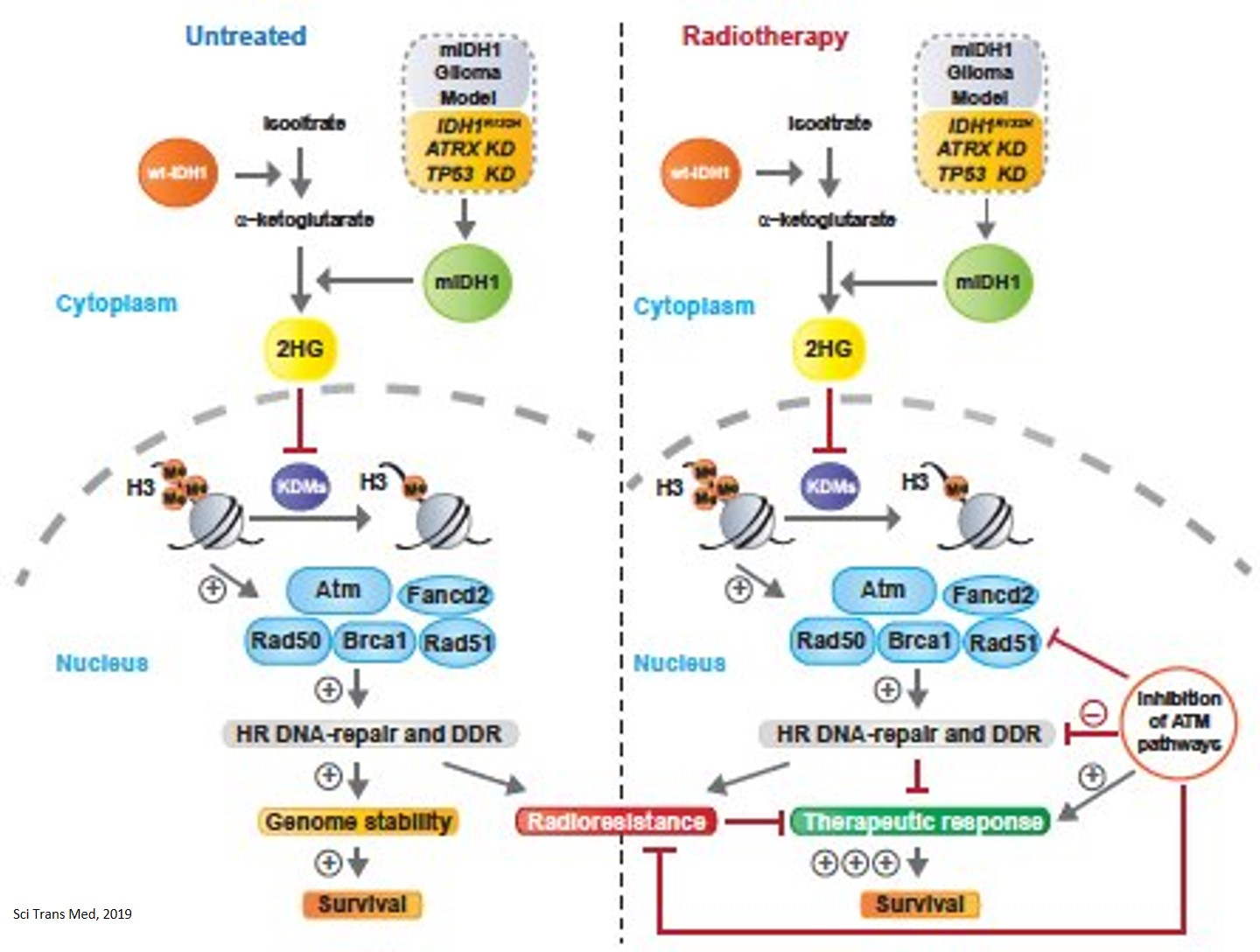 Linking glioma metabolism and DNA repair
