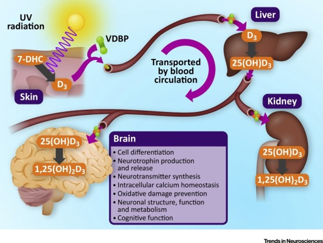 Role of Vitamin D in neuropsychiatric illness