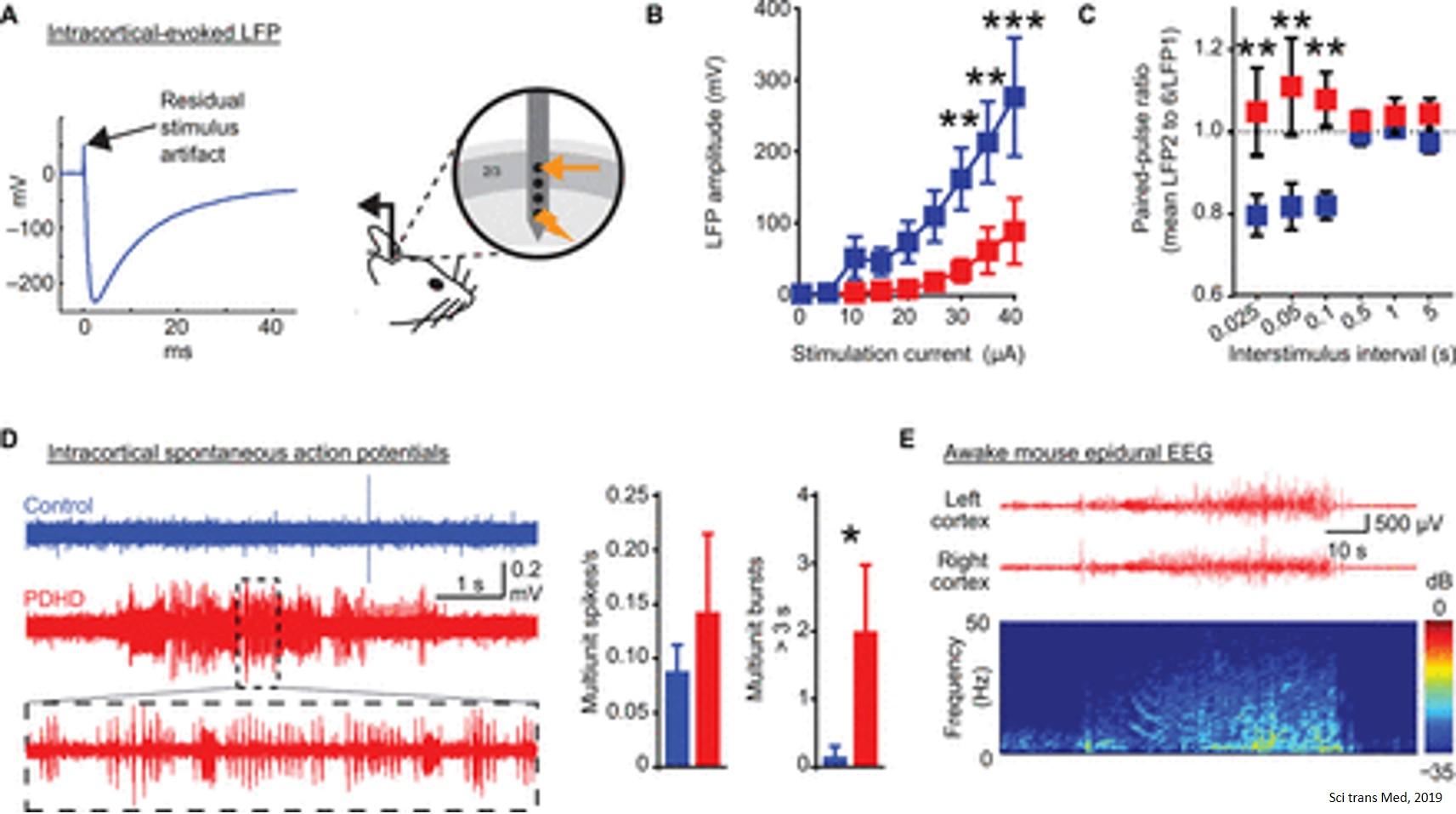 Predicting epileptic seizures few minutes in advance in brain metabolism deficient mouse model