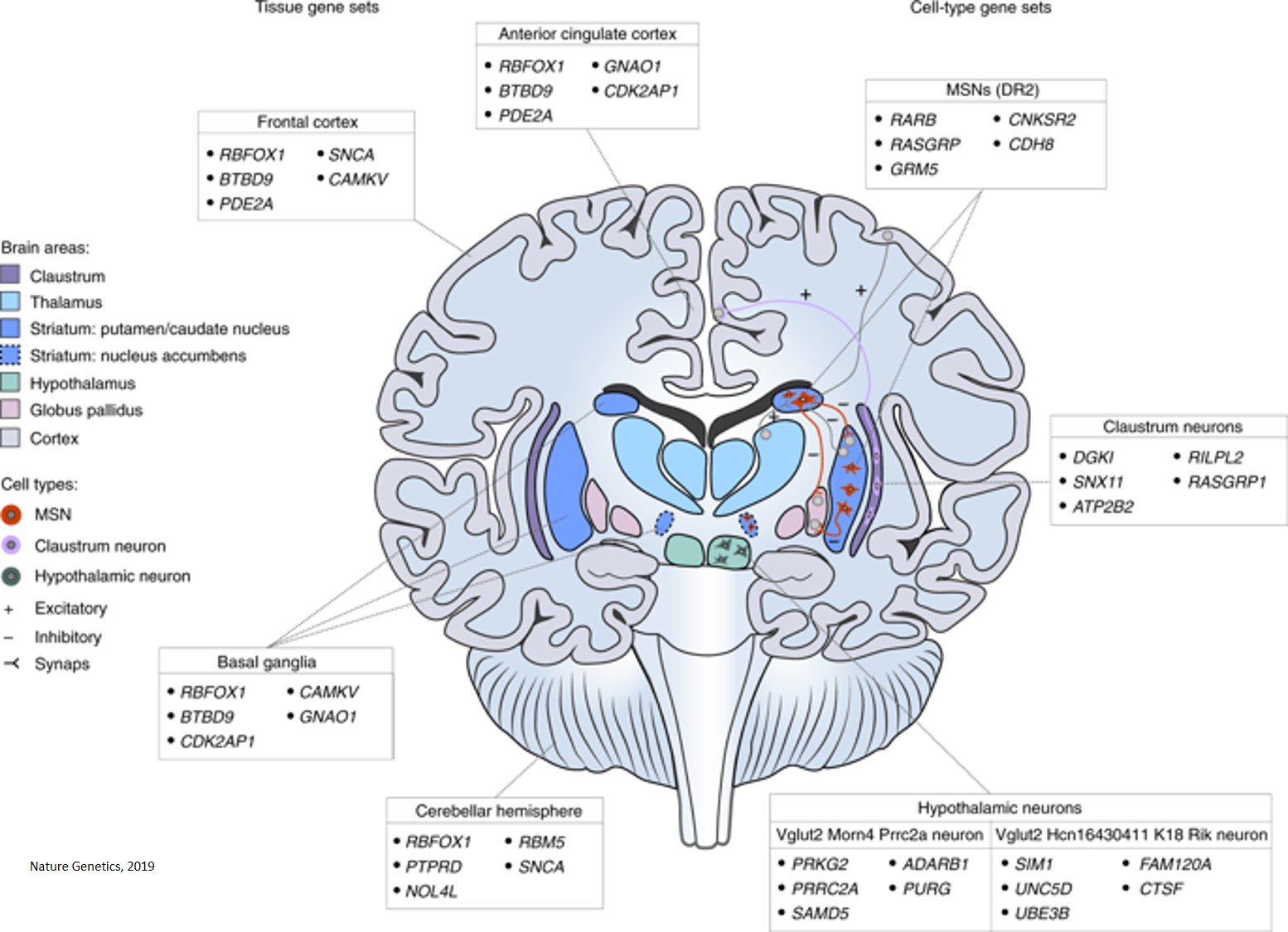 New risk loci and functional pathways involved in insomnia identified