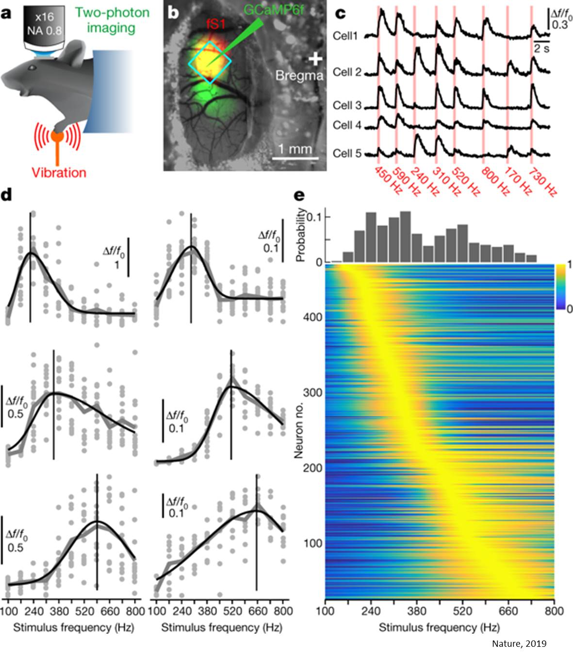 Vibration processing in the brain!