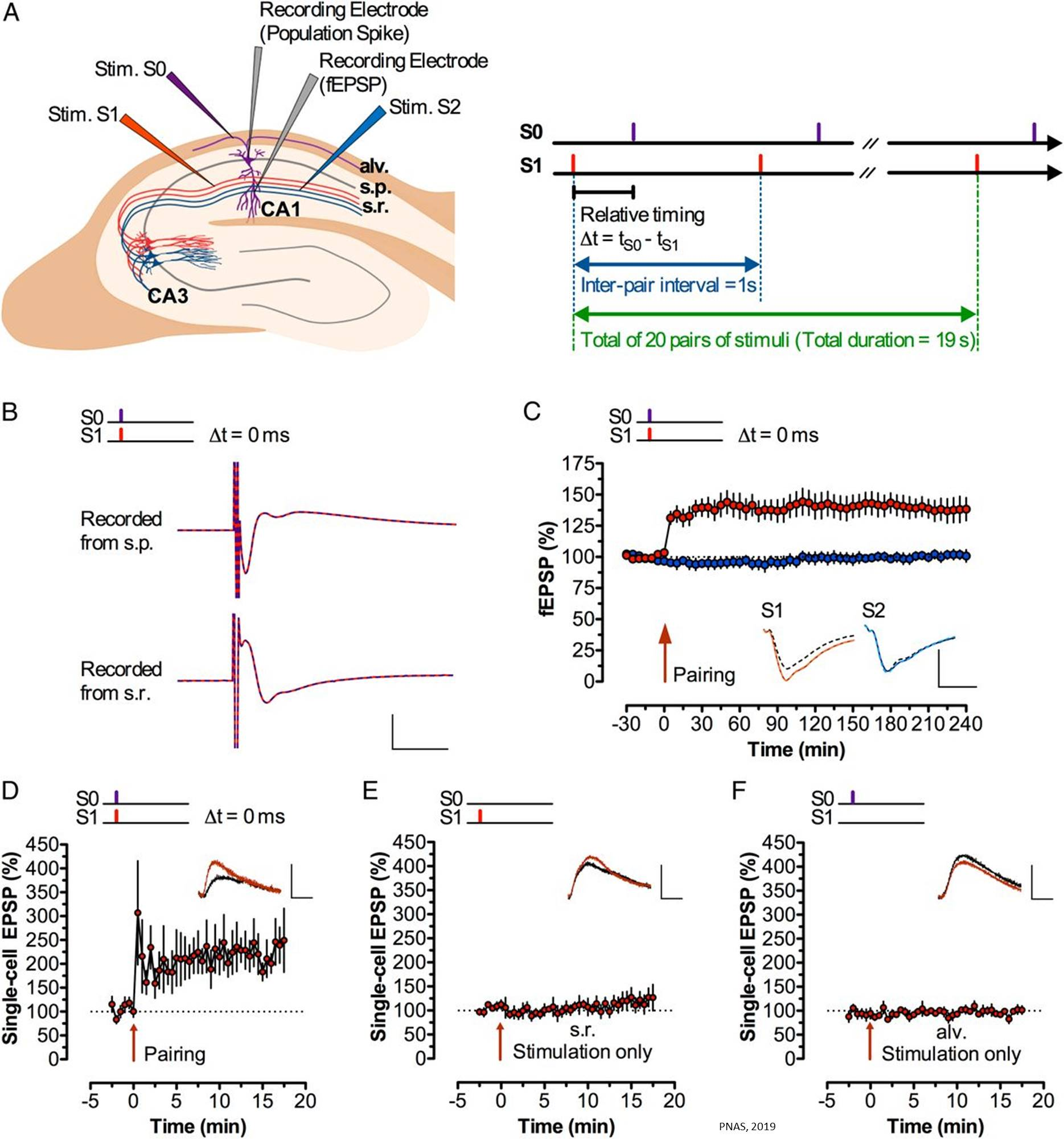 Quick thinking depends on the firing time between the neurons