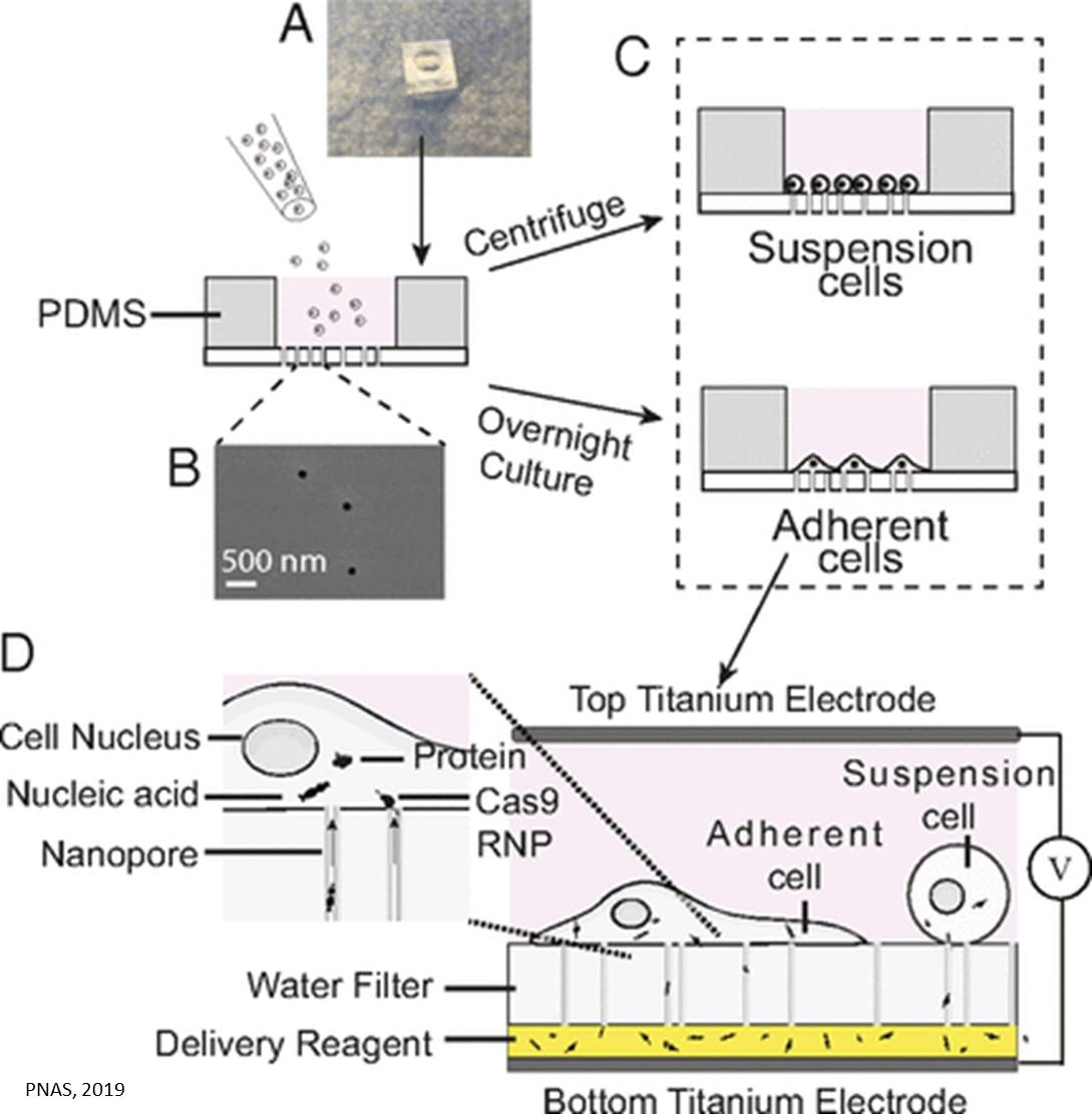 More efficient, simpler and cheaper nanopore electroporation