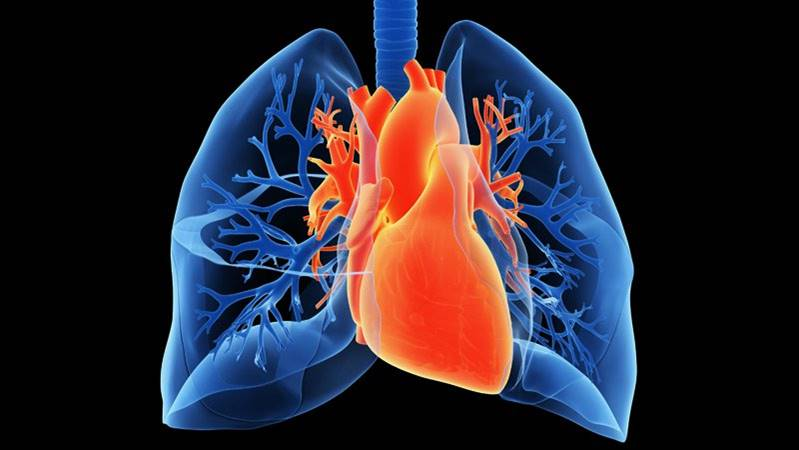 Hepatitis C-infected hearts and lungs safely transplanted