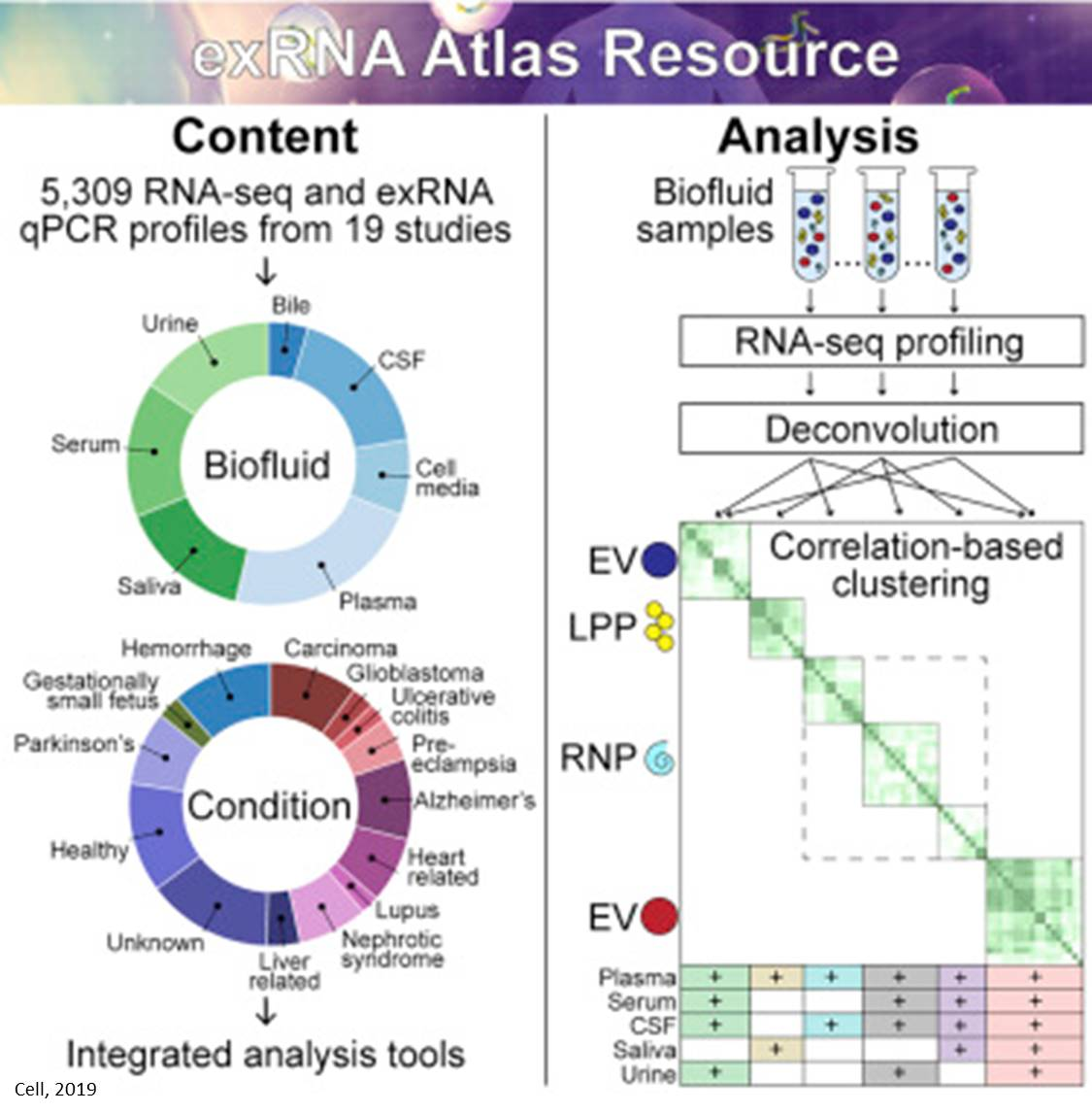 Computational tool to analyze new form of cell-cell communication molecule, exRNA
