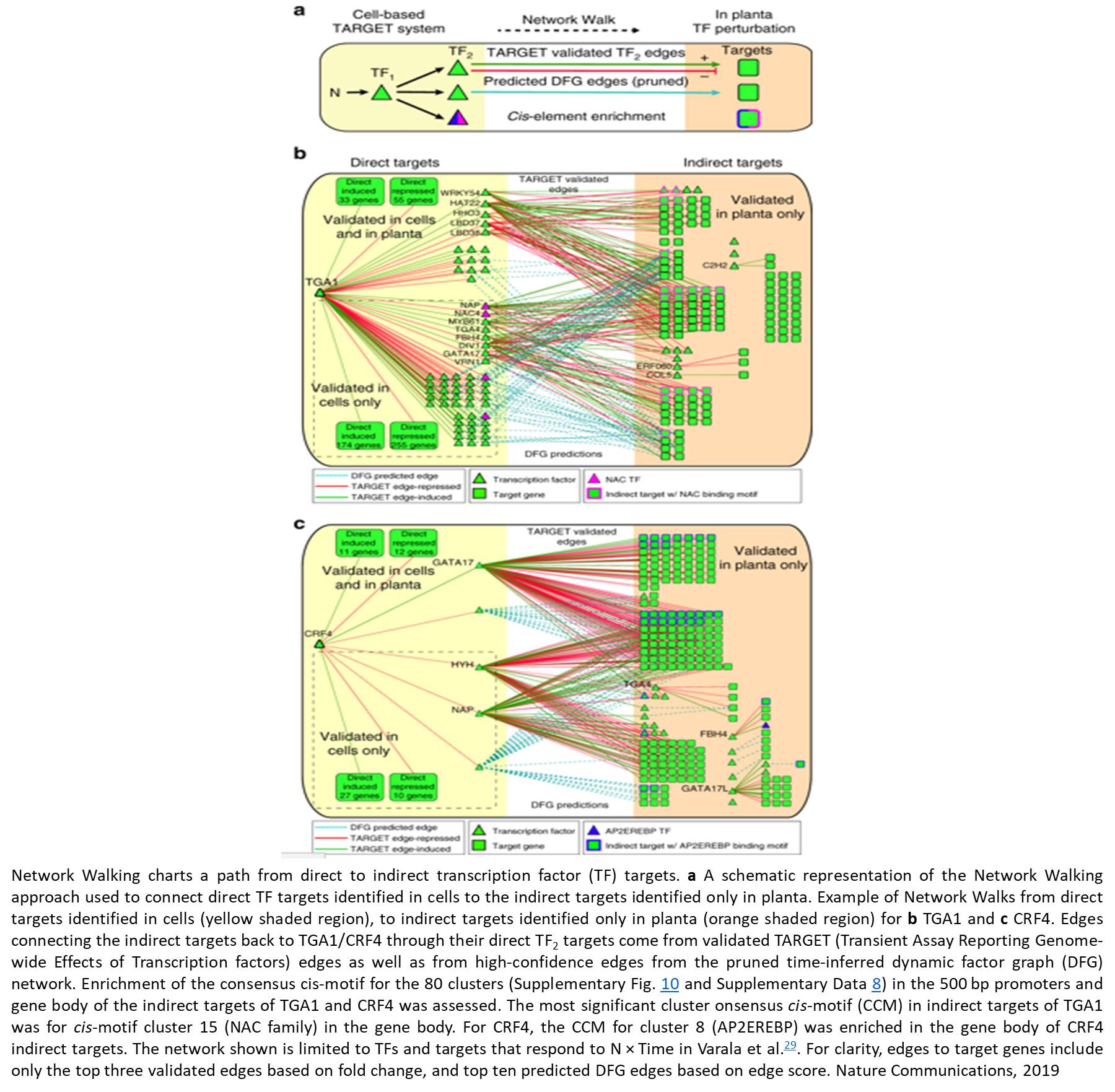 'Network walking' charts transcriptional dynamics in plants in response to nitrogen supply