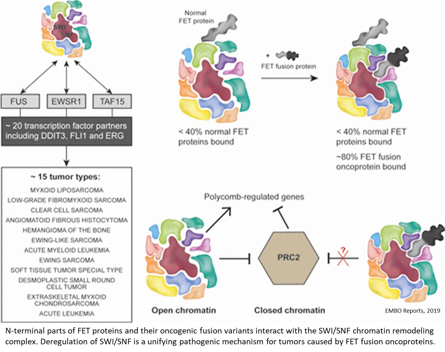 Dysregulation of chromatin remodeling complex by fusion oncoproteins in sarcomas