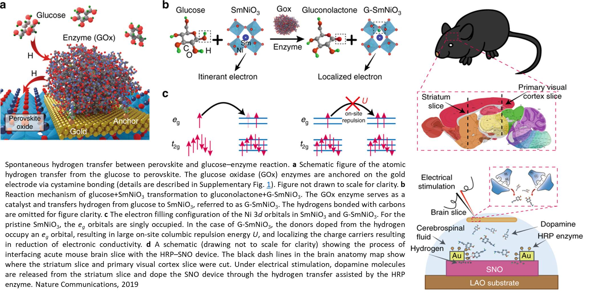 Measuring dopamine/glucose with a new quantum material