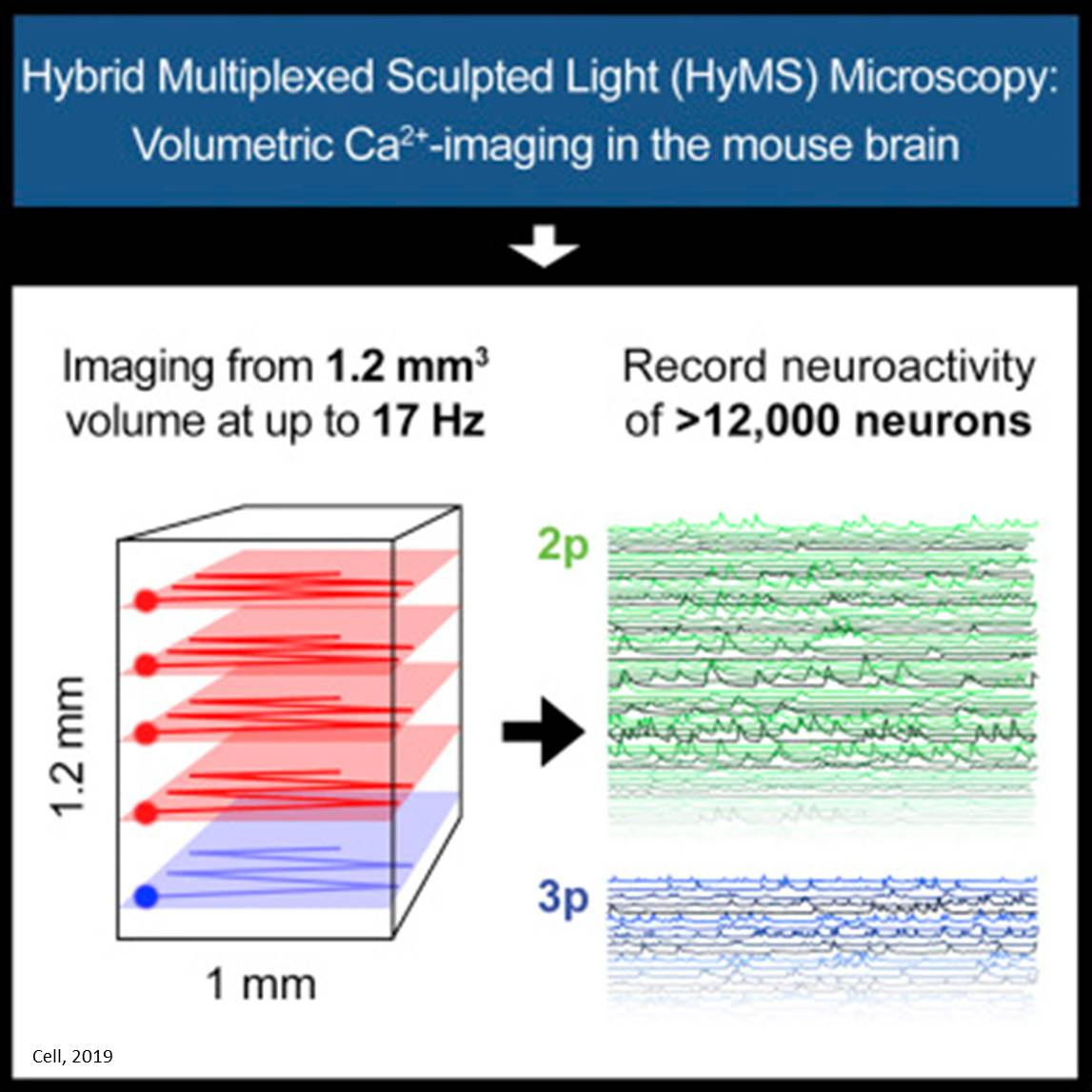 Hybrid multiplexed sculpted light microscopy (HyMS) to capture biological changes deep inside the brain