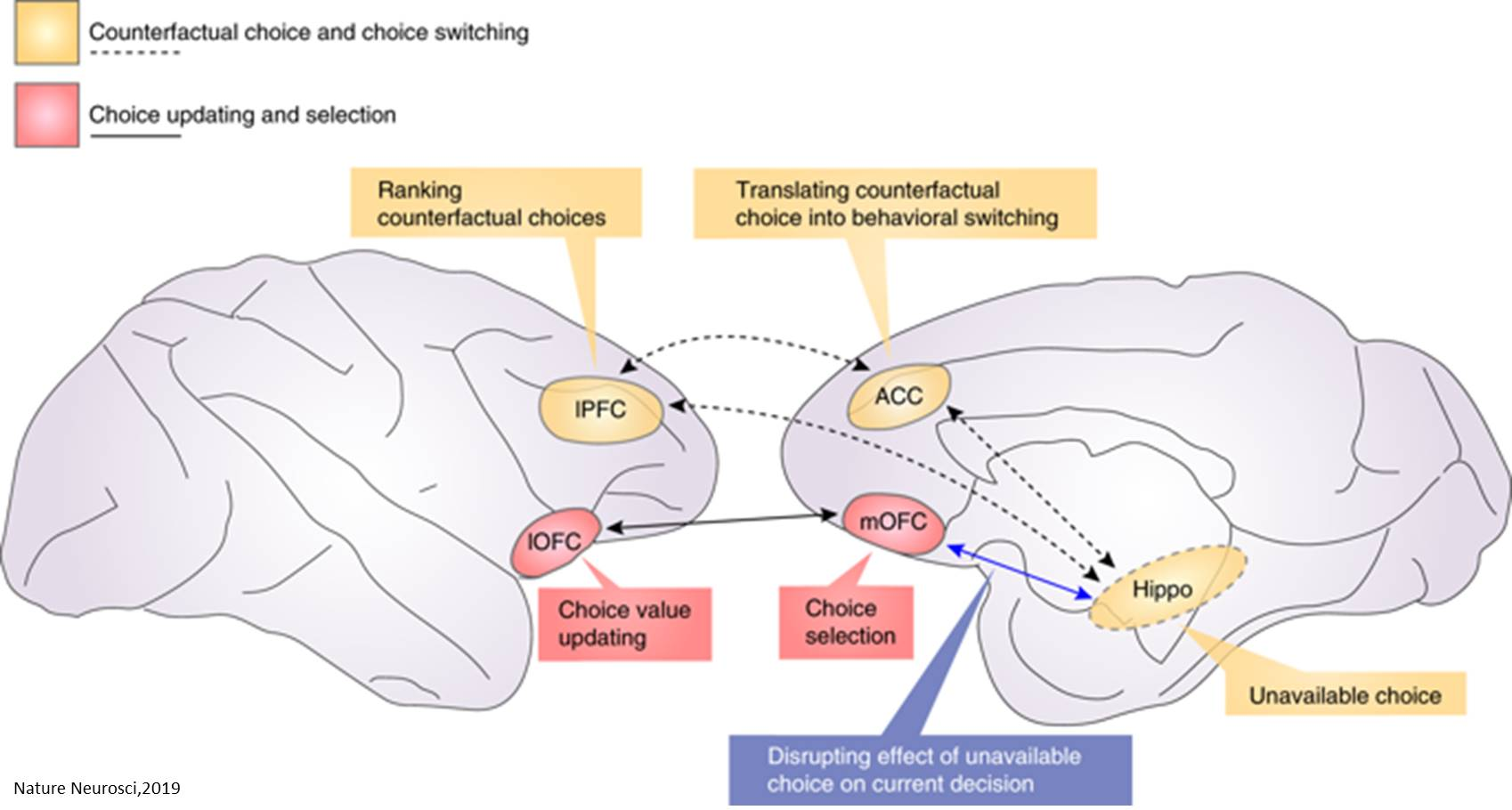Changing decision-making process in the brain using low-intensity ultrasound