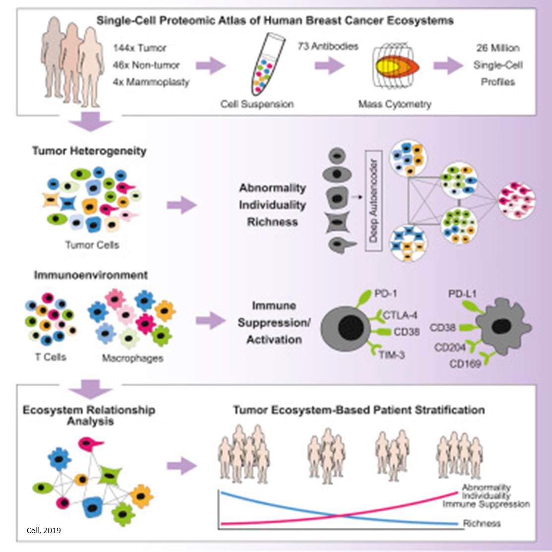 Evaluation of breast cancer cell ecosystem