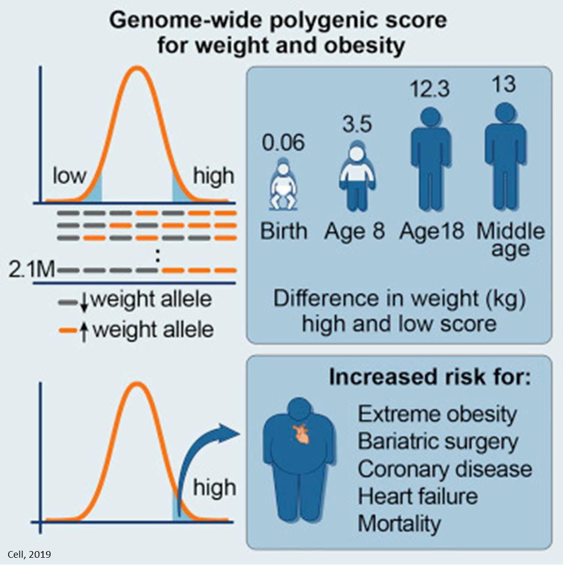 Predicting obesity with GPS (Genome-wide Polygenic Score)