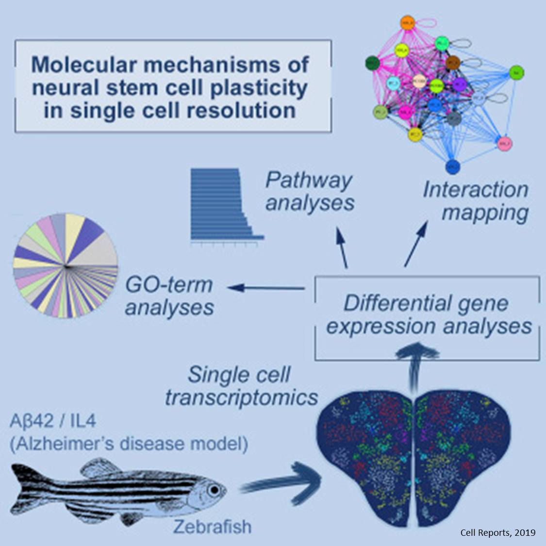 How fish brain responds to beta-amyloid challenge?
