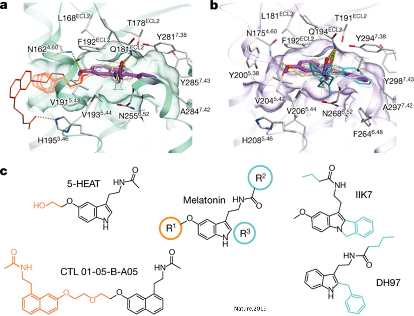 Structure of melatonin receptors involved in sleep solved!