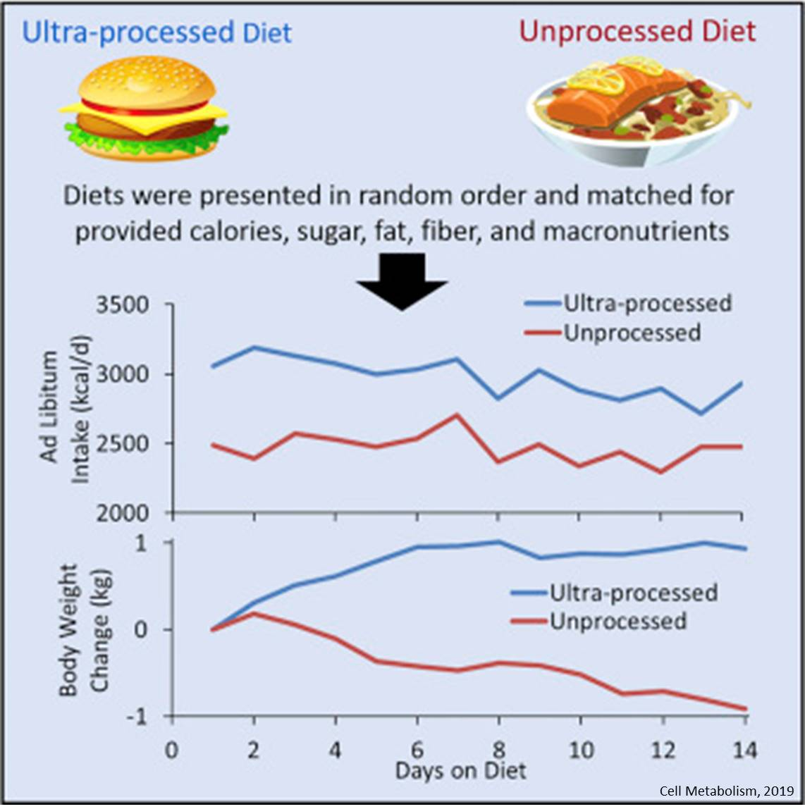 Heavily processed foods cause overeating and weight gain