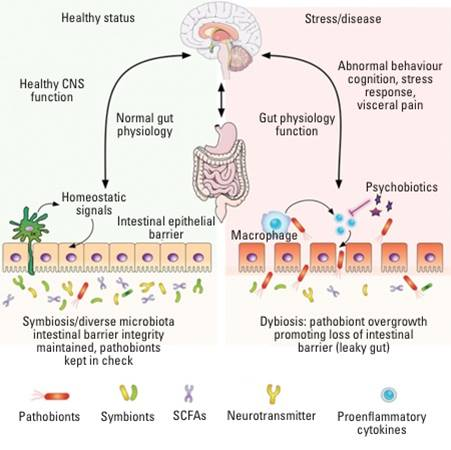 Anxiety might be alleviated by regulating gut bacteria
